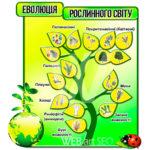 Еволюція рослинного світу зображення стенду з біології