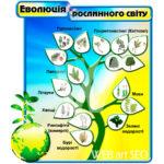 Эволюция растительного мира – для школы стенд – биологический – картинка