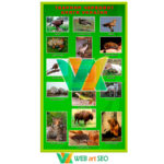 Животные красной книги – Школьный стенд1 – картинка Красная книга Украины