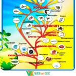 Наклейка в кабинет биологии – эволюция животного мира 2