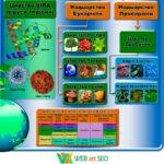 Систематика живої природи 2 – наклейка